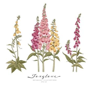 Bosquejo conjunto decorativo floral. dibujos de flores dedalera rosada, púrpura y amarilla.