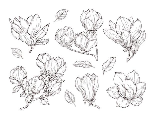 Bosquejo de flores de magnolia. dibujo botánico flor de racimo de primavera. planta de flor aislada y hojas. conjunto de vector de ramo vintage dibujado a mano. ilustración botánica floral, boceto de colección de ramo