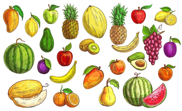 Bosquejo de frutas, naranja, manzana y papaya