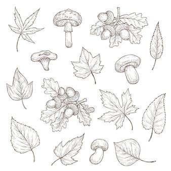 Bosquejo de hojas de otoño, setas y bellotas