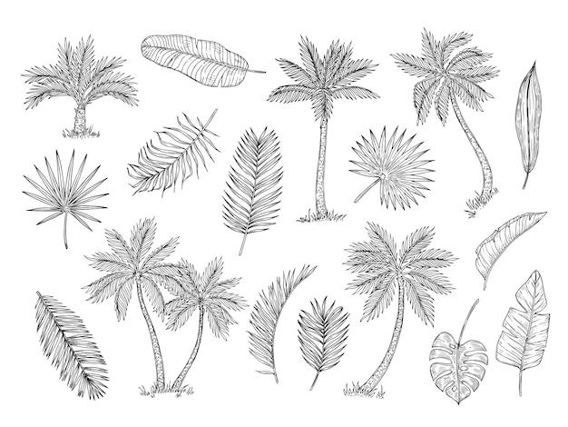 Bosquejo de palmera. árboles de la selva tropical y exóticas hojas de palmera dibujo a mano vintage conjunto aislado