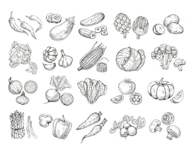Bosquejo de verduras. colección de vegetales de jardín dibujados a mano vintage.