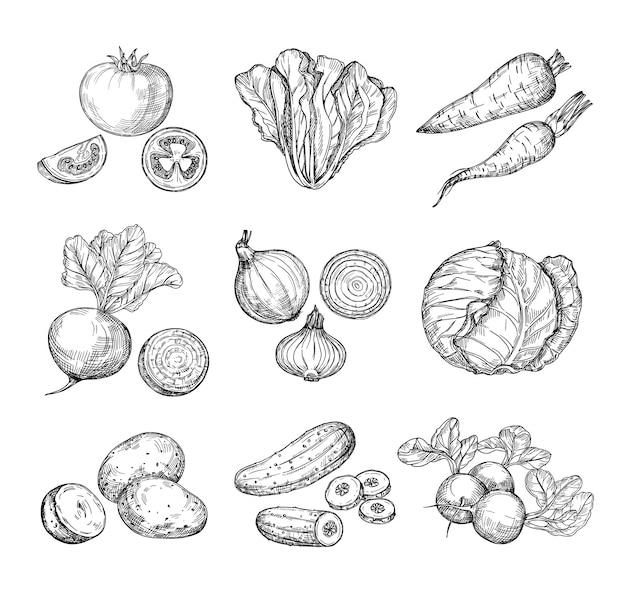 Bosquejo de verduras. tomate fresco pepino y zanahorias patatas. dibujado a mano cebollas rábano y repollo. conjunto de vegetales de jardín
