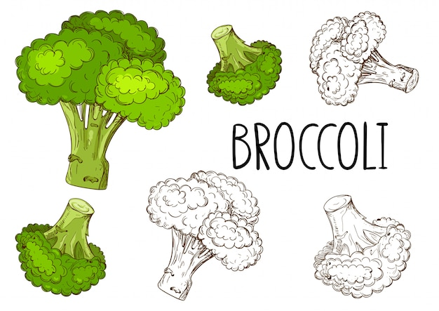 Brócoli aislado sobre fondo blanco.