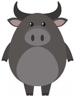 Búfalo gris sobre fondo blanco