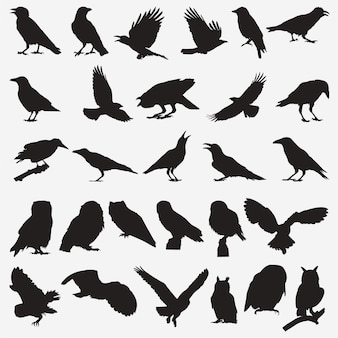 Búho cuervo siluetas