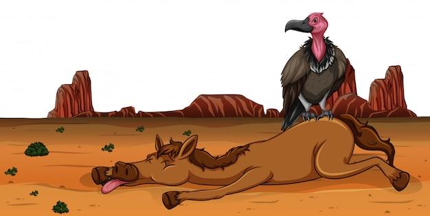 Un buitre en caballo muerto