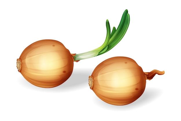 Bulbo de cebolla con conjunto de brotes verdes. cebollas enteras amarillas sin pelar realistas