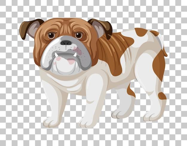 Bulldog blanco marrón en personaje de dibujos animados de posición de pie aislado sobre fondo transparente