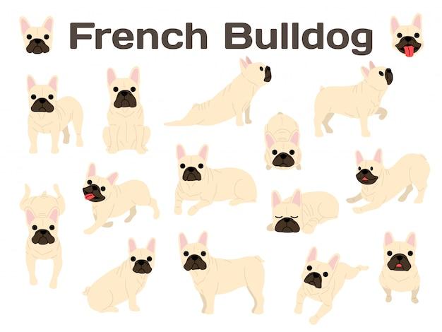 Bulldog francés en acción, perro feliz.