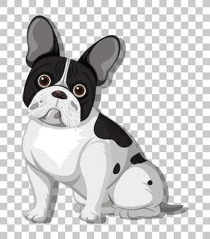 Bulldog francés en personaje de dibujos animados de posición sentada aislado sobre fondo transparente