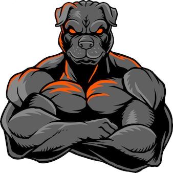 Bulldog fuerte 1