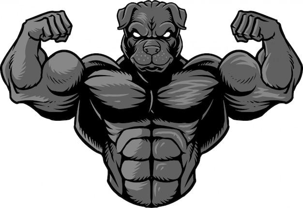 Bulldog fuerte 2