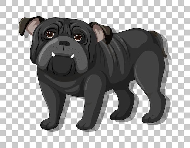 Bulldog negro en personaje de dibujos animados de posición de pie aislado sobre fondo transparente