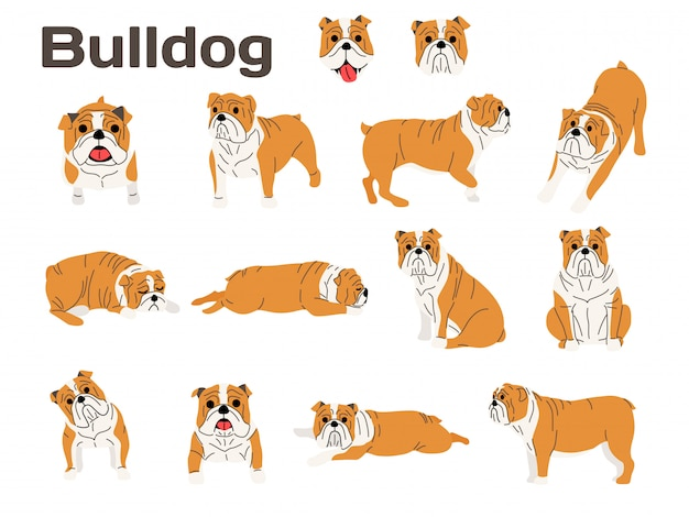 Bulldog, perro en acción, perro feliz.