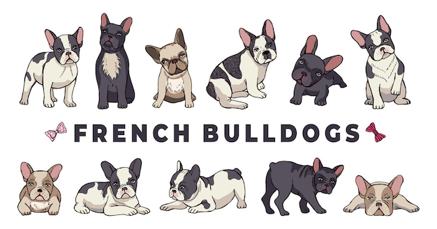 Bulldogs franceses. conjunto de bulldog. cachorro de divertidos dibujos animados aislado sobre fondo blanco. bulldog cachorro, perro de raza pura ilustración divertida