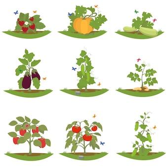 Bush plantas frutales.