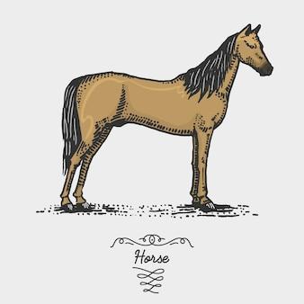 Caballo grabado, dibujado a mano ilustración en estilo scratchboard grabado en madera, dibujo vintage especies.