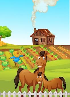 Caballos en escena de la granja