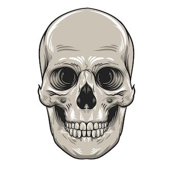 Cabeza de cráneo con ilustración de mandíbula