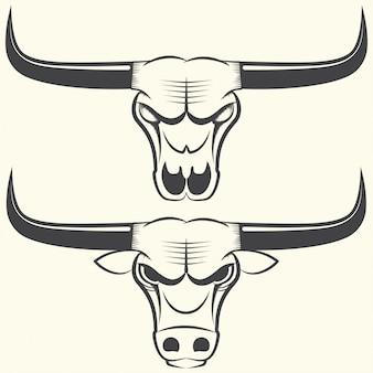 Cabeza y cráneo de toro