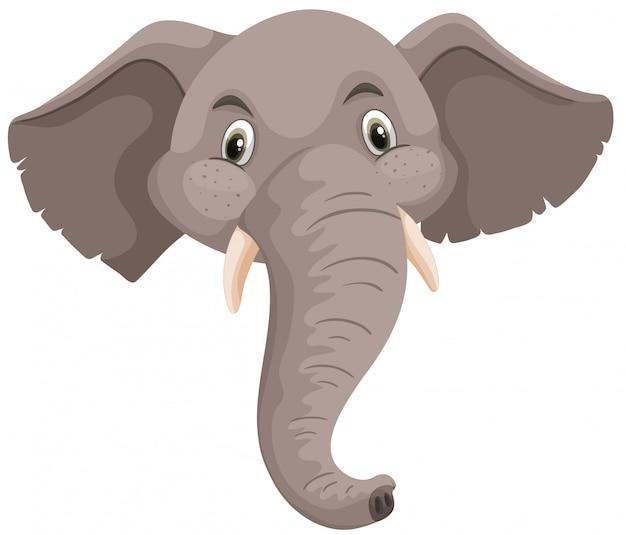 Cabeza de elefante aislado fondo blanco
