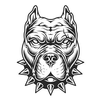 Cabeza de pitbull blanco y negro