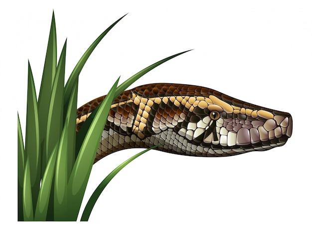 Cabeza de serpiente detrás de hierba verde