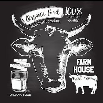 Cabeza de las vacas dibujado a mano. dibujo de tiza en la ilustración de vector de pizarra