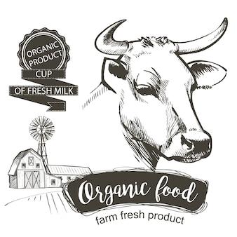 Cabeza de las vacas dibujado a mano en un estilo gráfico. ilustración de vector vintage grabado