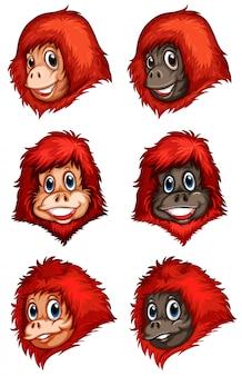 Cabezas de chimpancés