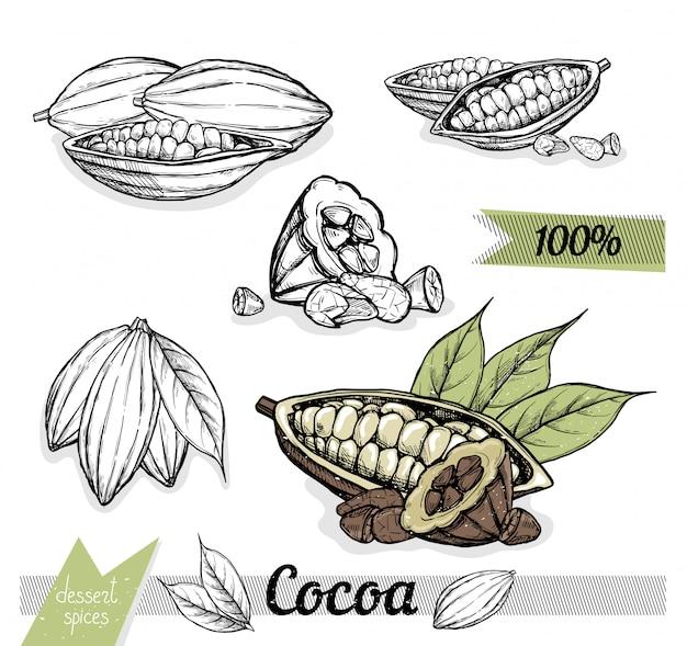 Cacao aislado en blanco.