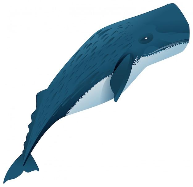 Cachalote mamífero marino