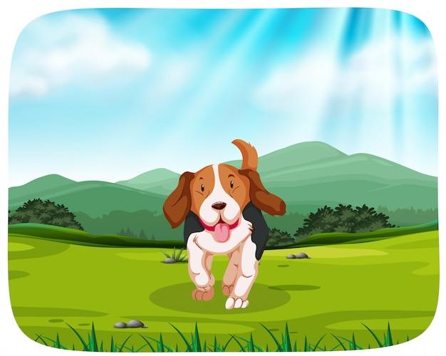 Cachorro en el parque natural