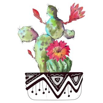 Cactus de acuarela aislado sobre fondo blanco