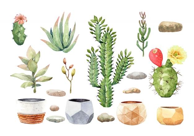 Cactus cactus suculentos y piedra con maceta de árbol.