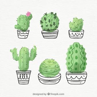 Cactus dibujados a mano con estilo divertido