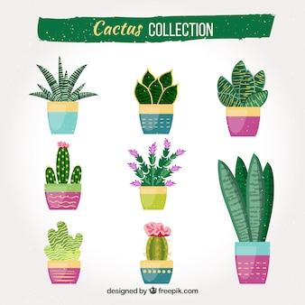 Cactus divertidos con estilo colorido