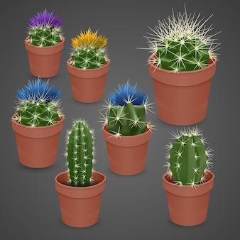 Cactus floreciente aislado sobre fondo oscuro