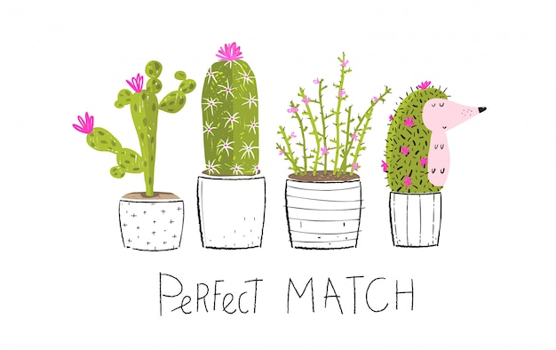 Cactus en maceta y escondiendo erizo