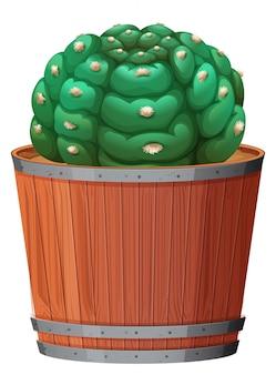Un cactus en la olla.