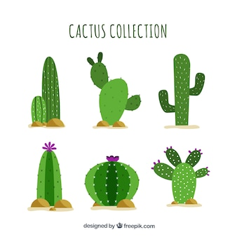 Cactus planos con estilo gracioso