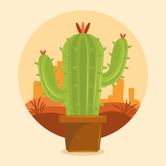 Cactus suculenta maceta en el desierto