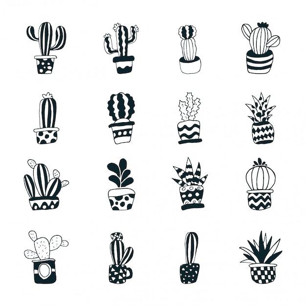 Cactus suculento