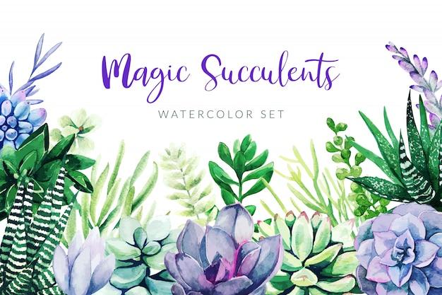 Cactus violeta y plantas suculentas, fondo horizontal