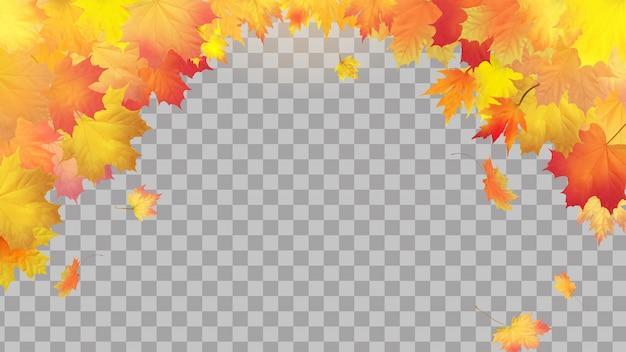 Caen hojas de arce otoñal sobre fondo transparente