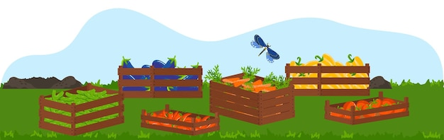 Caja de madera con ilustración de alimentos, frutas y verduras ecológicas de la cosecha.