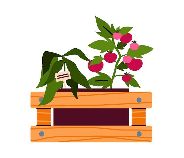 Caja con plantas comestibles para la ilustración de dibujos animados de agricultura doméstica