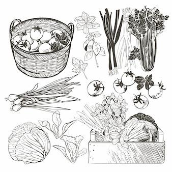 Cajón de madera lleno de vegetales frescos y hierbas.