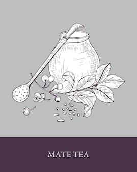 Calabaza tradicional, bombilla con filtro o paja y planta de té de yerba mate con hojas y bayas